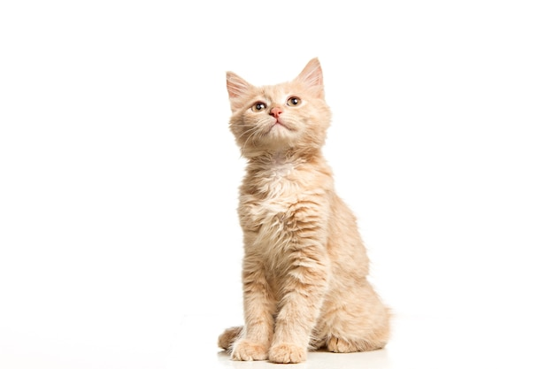 흰색 바탕에 고양이 무료 사진