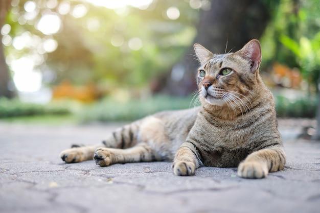 A cat in the park Premium Photo