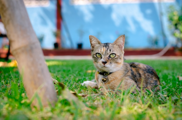Cat relaxing and sitting on the grass. Premium Photo
