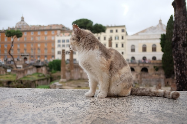 Cat sits on a rock in square Premium Photo