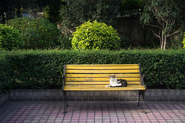 Sensational Cat Sitting On A Bench Photo Free Download Inzonedesignstudio Interior Chair Design Inzonedesignstudiocom