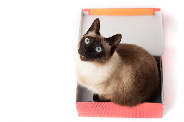 Cat sitting in a color box isolated. cardboard box with a cat Premium Photo