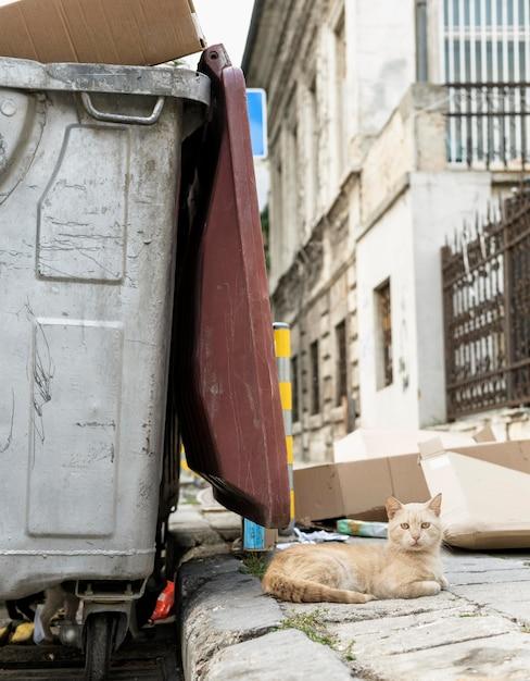 Кошка сидит рядом с мусорным баком на открытом воздухе Бесплатные Фотографии