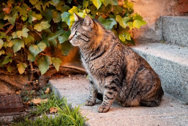 Gatto seduto sulle scale di un edificio accanto a una pianta verde Foto Gratuite