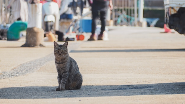 A cat sitting on the street near by the port Premium Photo