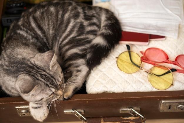 ラゲッジケースハイビューで眠っている猫 無料写真