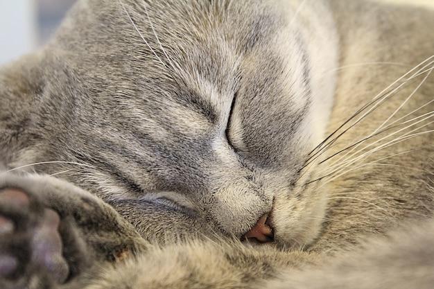Cat sleeping Free Photo