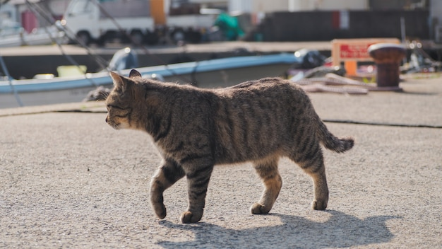 A cat walking on the street near by the port Premium Photo