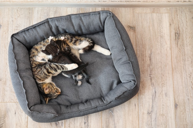 Cat with cute little kittens in pet bed Premium Photo