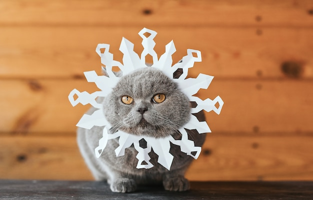 Cat with a paper snowflake on the face. gray cat with yellow eyes in the image of a snowflake on a wooden background. Premium Photo