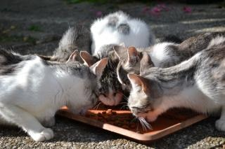 Cats eating  pets Free Photo
