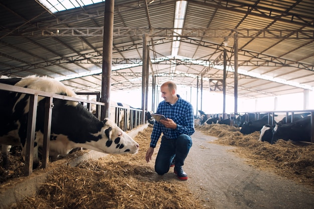 Cattleman holding tablet and observing domestic animals for milk production Free Photo