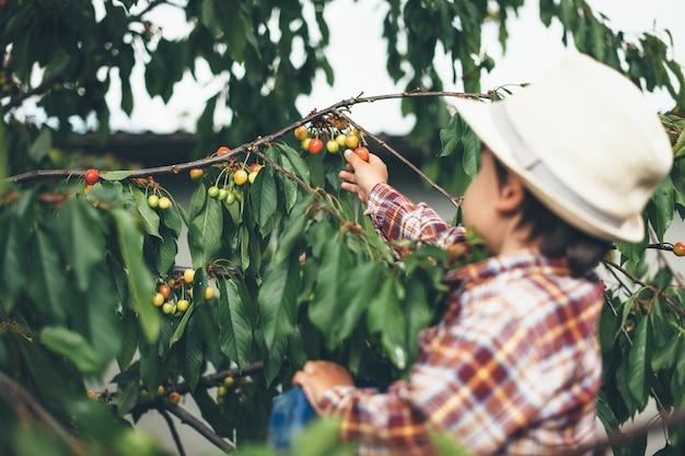 晴れた日に木からさくらんぼを摘んでいた白人の小さな子供 Premium写真