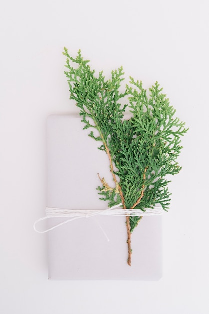Cedar leaves tied and envelope tied with string isolated on white backdrop Free Photo
