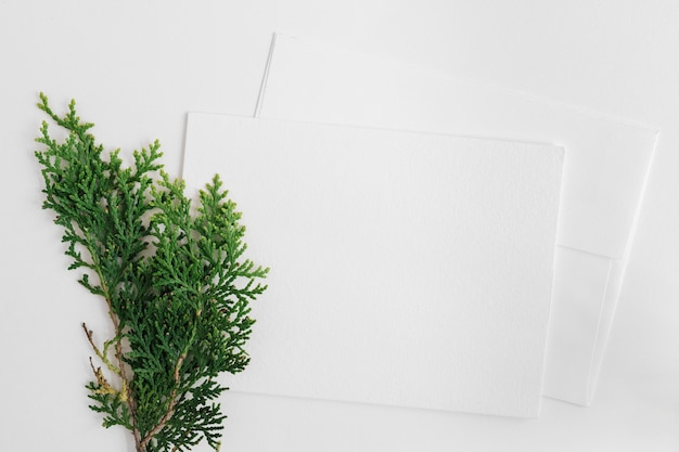 Cedar leaves with two envelope isolated on white backdrop Free Photo