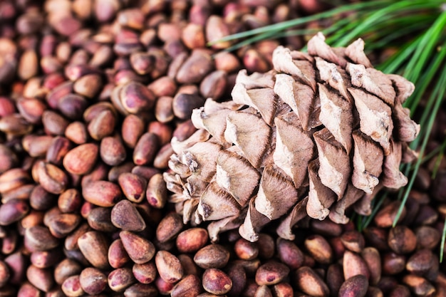 Cedar pine cone with pine nuts close-up with copyspace top view Premium Photo