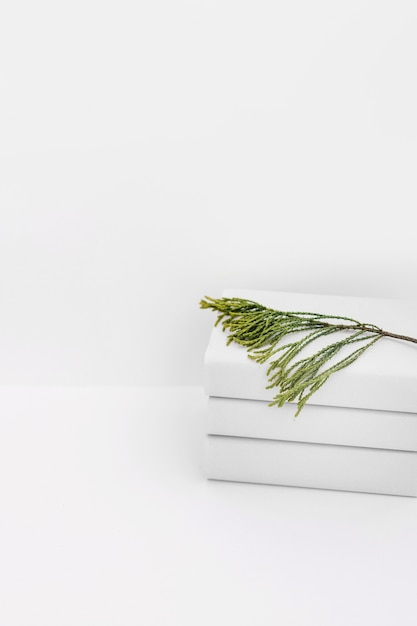 Cedar twig on stacked of white books against white background Free Photo