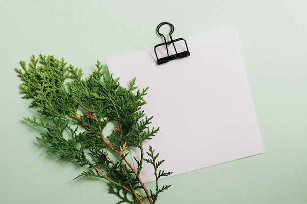 Cedar twig with blank white paper with paperclip over pastel background Free Photo