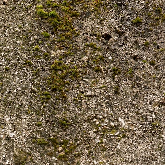 Поверхность цемента с камнями и мхом Бесплатные Фотографии