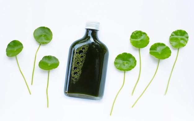 Центелла азиатская листья на белой поверхности Premium Фотографии