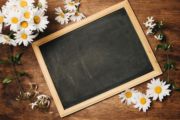 Chalkboard near fresh daisy flowers Free Photo