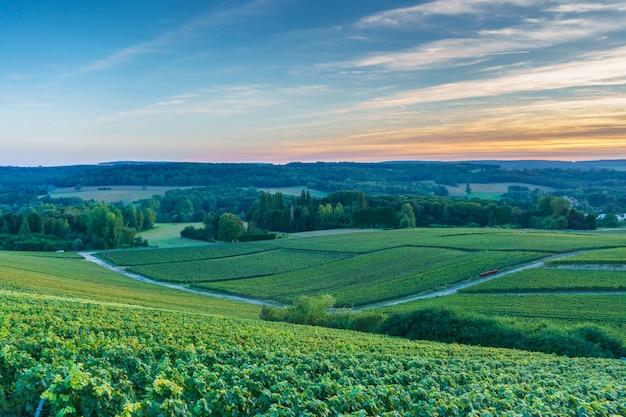 Champagne vineyards at sunset, montagne de reims, france Premium Photo