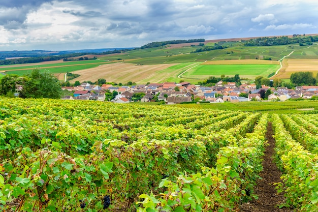 Champagne vineyards at sunset, montagne de reims, france Premium Photo