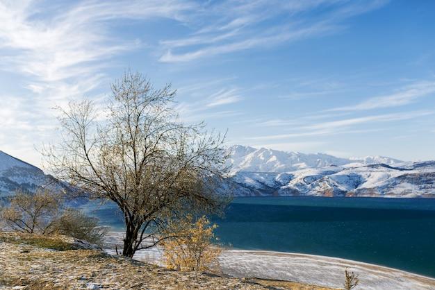 ウズベキスタンの冬のチャルヴァク貯水池と孤独な木 Premium写真