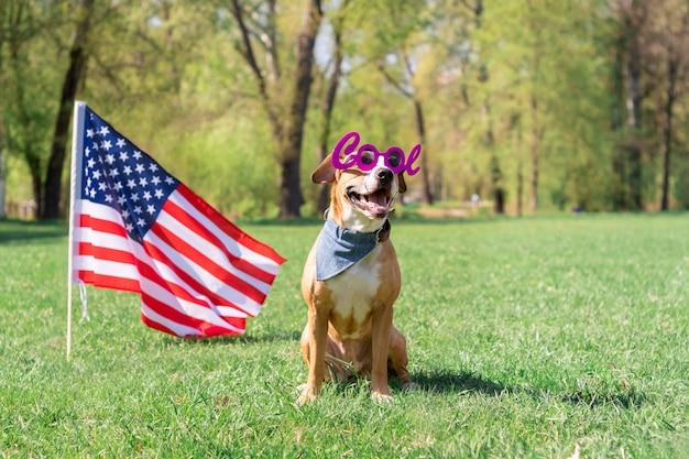 Веселый и счастливый стаффордширский терьер в «классных» маскарадных очках сидит у газона перед флагом сша в парке Premium Фотографии