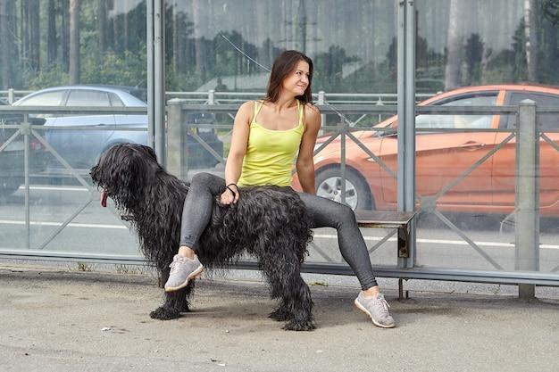 검은 Briard와 쾌활 한 여자는 도시 거리에서 대중 교통을 기다리고 있습니다. 프리미엄 사진