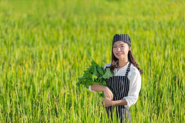 Chef che raccoglie prodotti freschi dalla fattoria biologica Foto Gratuite