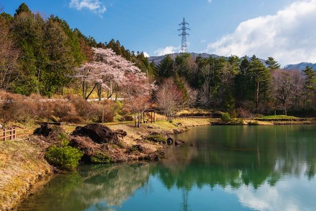 Cherry blossom park at kiso valley Premium Photo