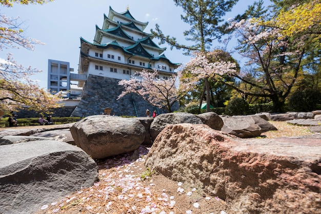 Cherry blossom petals with nagoya castle Premium Photo