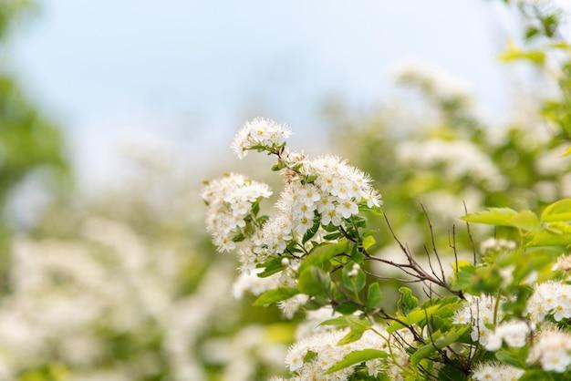 青い空を背景に桜。 Premium写真