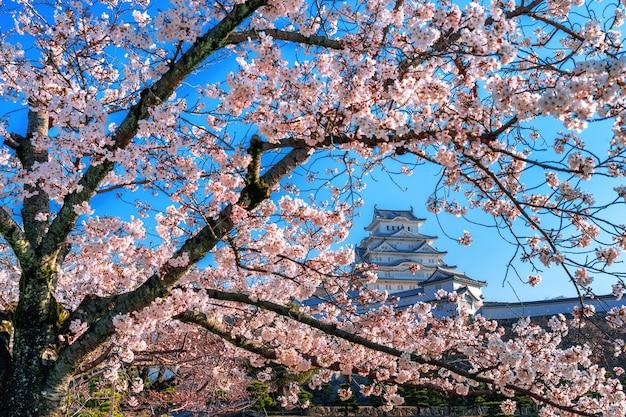 Вишневый цвет и замок в химедзи, япония. Бесплатные Фотографии