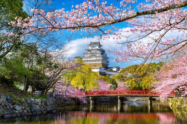 Cherry blossoms and castle in himeji, japan. Free Photo