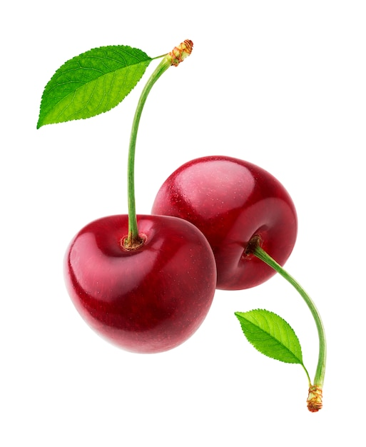 Cherry isolated on white  with clipping path Premium Photo
