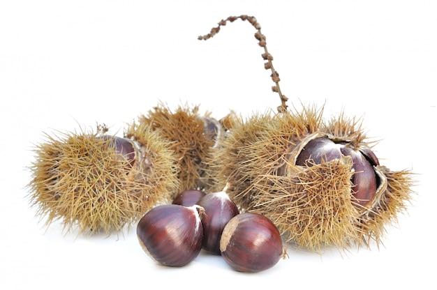 Chestnuts Premium Photo