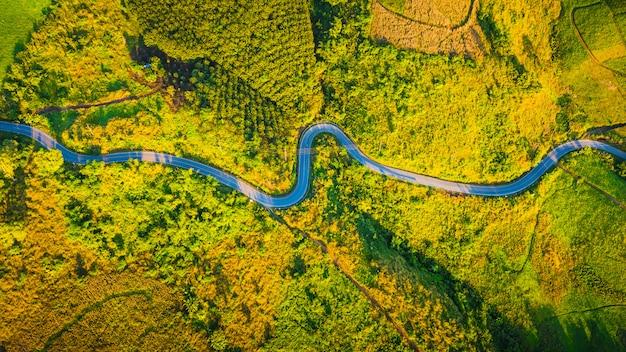 Кривая дороги вида с воздуха на горе в сезоне осени на chiang rai таиланде Premium Фотографии