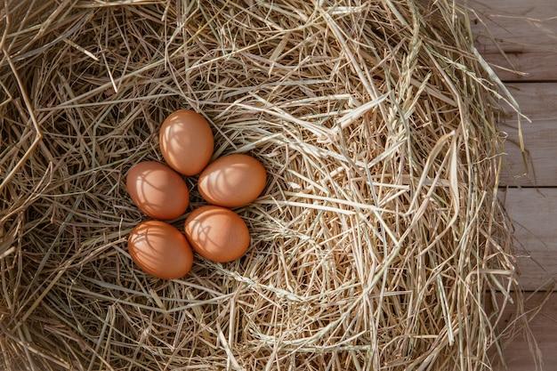 Chicken eggs in a chicken nest on rice straw Premium Photo