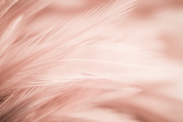 Chicken feathers in soft and blur style for the background Premium Photo