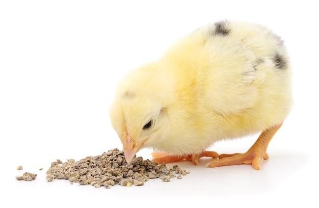分離された食品と鶏肉 Premium写真