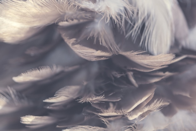 Chickens feather texture for background Premium Photo