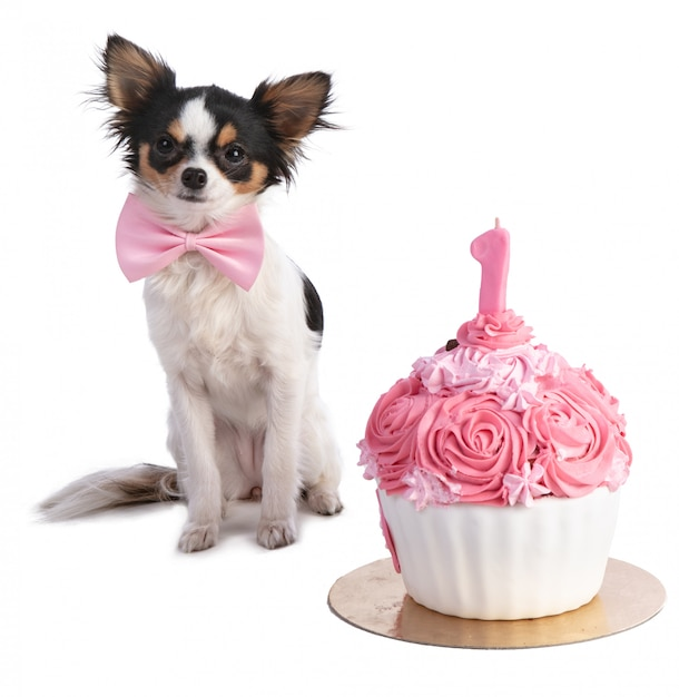 Peachy Chihuahua In Front Of Her A Pink Birthday Cake Premium Photo Funny Birthday Cards Online Unhofree Goldxyz
