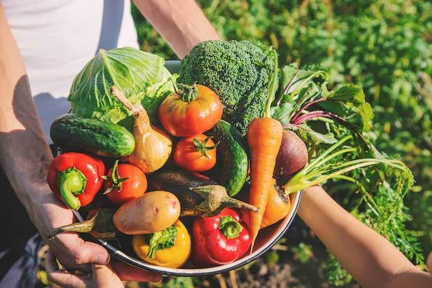 Ребенок и отец в саду с овощами в руках. Premium Фотографии