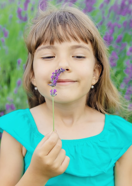 A child in a flowering field of lavender. selective focus. Premium Photo