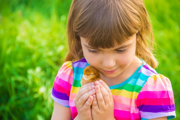 Child girl with chicken in hand. selective focus. Premium Photo