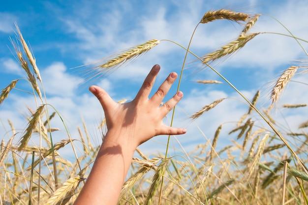 Детская рука тянется к колоску пшеницы Premium Фотографии