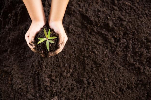 아이 손을 잡고 젊은 녹색 식물을 돌보는 무료 사진