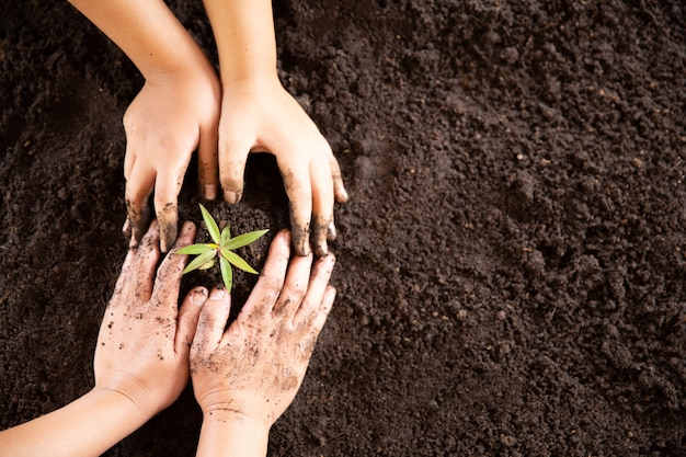 Child hands holding and caring a young green plant Free Photo